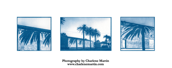 Palm Shadows - Triptych