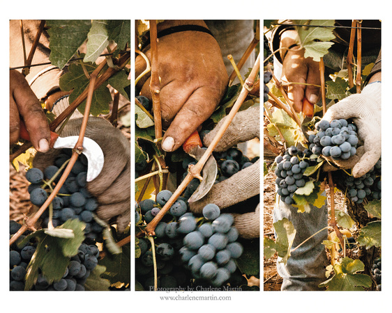 Cutting the Grapes - Triptic
