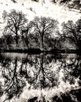 Cosumnes Reflections